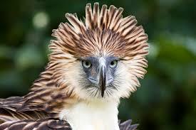 phil eagle