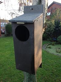 tawnybox