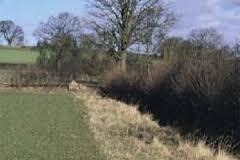 field margin